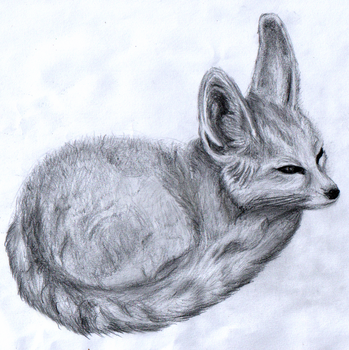 Fennec Fox by kovacicster