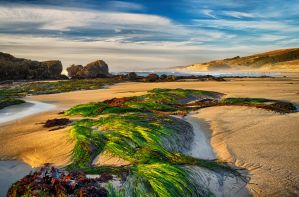 Pescadero Beach by FeralWhippet