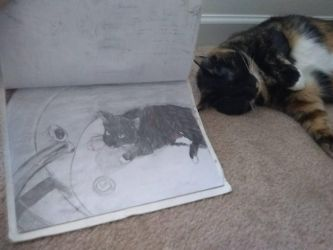 My cat in a bathtub drawing with my cat by ElephantGun2001