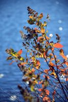 Colors of Fall by dunkeltoy