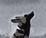 I bless the rains by Jackkdaw