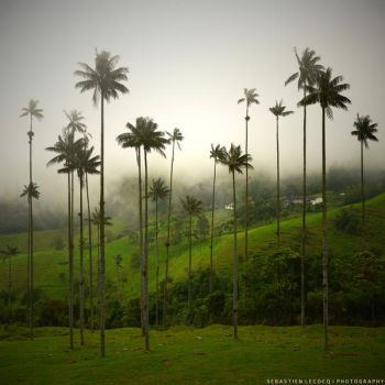 Giants of Colombia by lux69aeterna