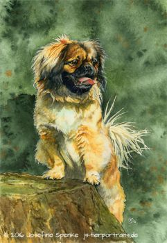 ART for TH CHEMNITZ - Pekingese by elektroyu