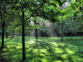 Morning in a park by starykocur