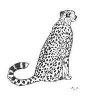 paintchat cheetah o.o by wildtoele