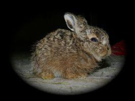 Baby Leveret by ywsdavey