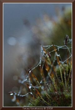 Drops on moss by ComputerGod