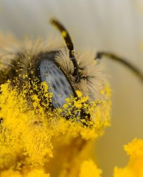 Pollen in your face! by nolra