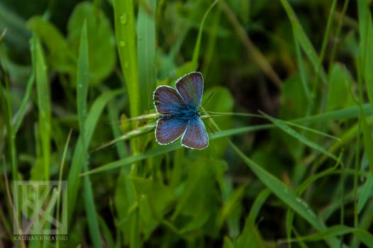 Fly Butterfly . . . ? by kaioian