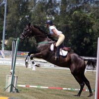 STOCK Showjumping 372 by aussiegal7