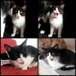 Funny cat faces by Talty