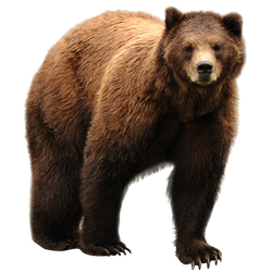 unrestricted hq bear 2 by aio350