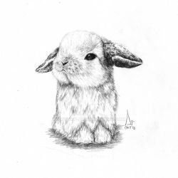 Rabbit by Andrew-AR