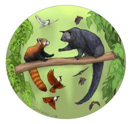Red Panda and Binturong by Gredinia