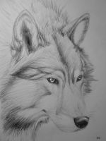 Wolf by PackRatTheArtist