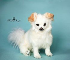 Poseable toy Commission fluffy chihuahua by MalinaToys