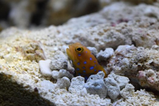 Blue Dotted Fish by EndOfGreatness