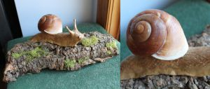 Clay snail by Hands-and-Teeth