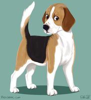 beagle by danyhund