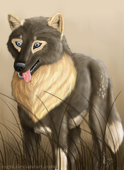 Grey wolf by Eigni