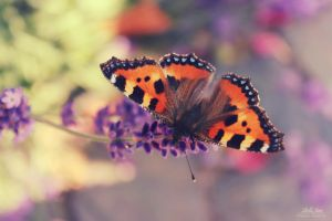 Beautiful creature by IsabellaJainePhoto