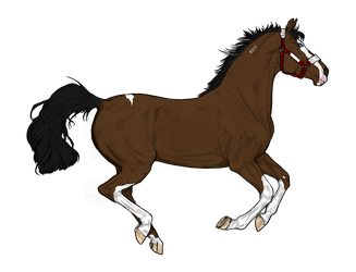 Bay Paint stallion adopt by NorthernMyth