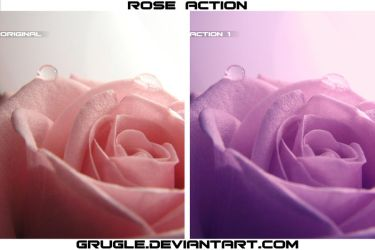 Rose Action by Grugle