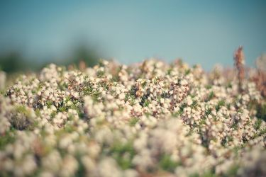 ocean of flowers. by MCMaybach