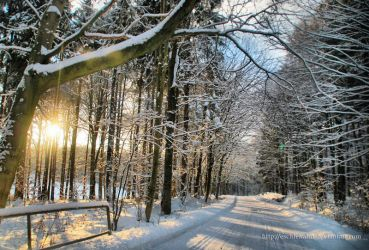 Winter impressions 3 by eschlehahn