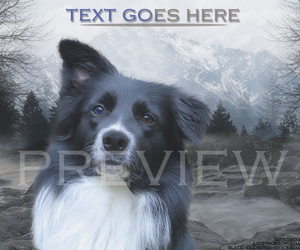 Border Collie by Fayrii