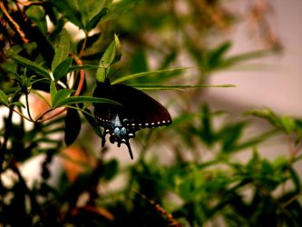 Zoo Trip Butterfly 2 by the-astronaut