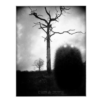 THE BAD TREE by LEQUARK