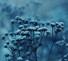 Lost in blue, all silvered over with white by Peterix