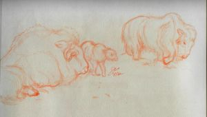 Musk Oxen Family by elipse