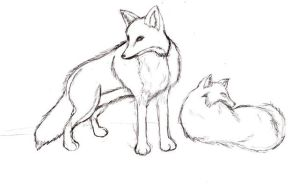 Fox drawing previous by Seliex