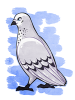 R: White pigeon by Chigle