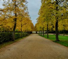 yellow autumn by Mittelfranke