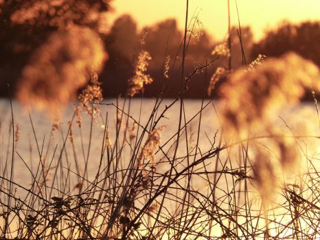 Little Reeds by JacqBoja