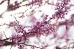 Spring in Oklahoma 4 by bowtiephotography