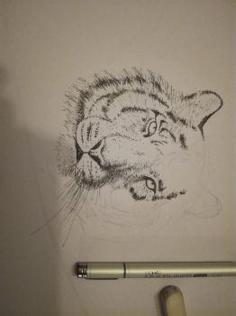 Inktober 2017, Day 16: Tiger (work in progress) by GLangGould