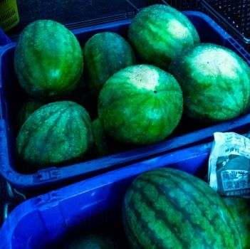 Magnificent melons by Dzulkifli27