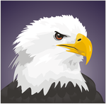 Bald eagle by Vitor-Silva