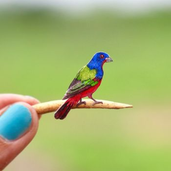 Painted Bunting - Paper cut birds by NVillustration