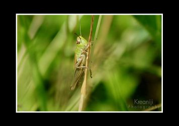 cricket no.2 by Kreaniji-PHOTOGRAPHY