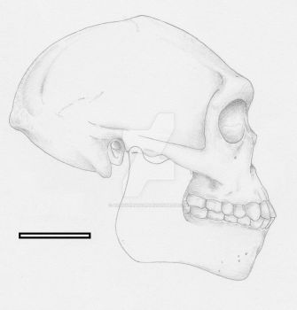 Homo erectus male from Indonesia (1.8-1.2 Mya) by Afrovenator