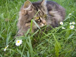 My cat in the garden by soffl