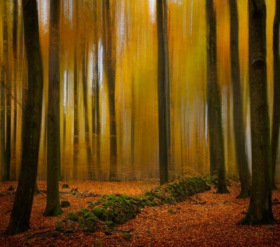 Magical autumn forest. by Wodger