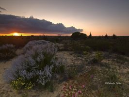 Wildflowers at Sunrise by FireflyPhotosAust