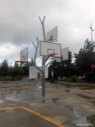 Basketball Tree by HydromelKing