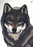 Wolf by ScarsAndStories